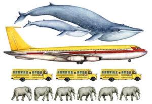 الحوت الأزرق أكبر أم الفيل؟
